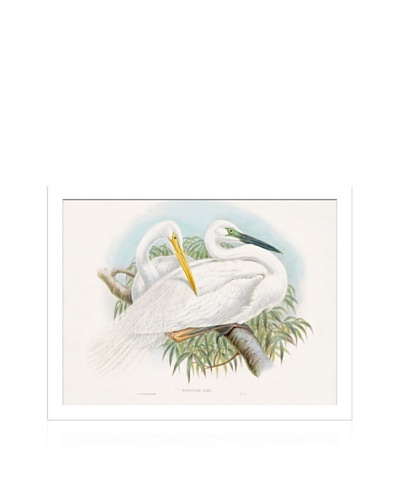 Lillian August Seabirds I