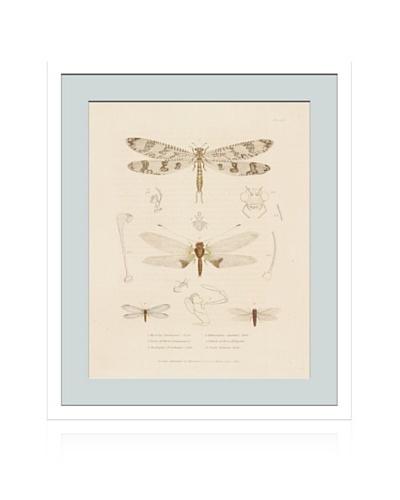 Lillian August Vintage Dragonflies