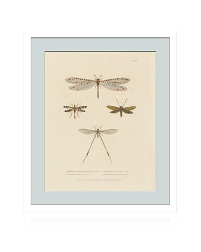 Lillian August Vintage Dragonflies