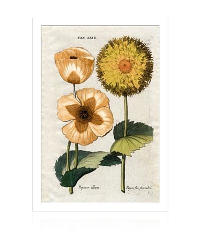 Lillian August Orange Flora