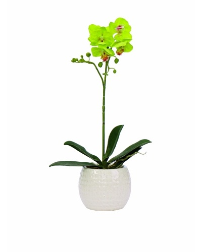 Lux-Art Silks Small Orchid In White Container, Green