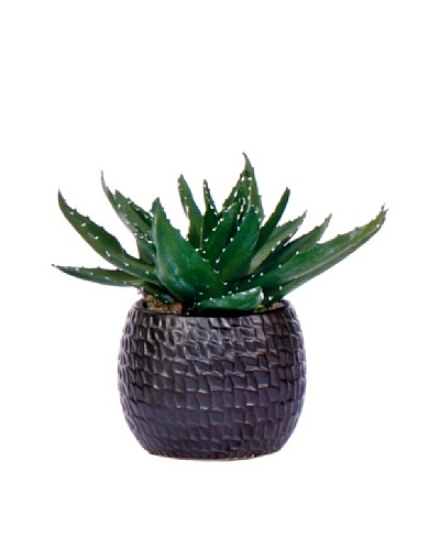 Lux-Art Silks Aloe in Black Container, Green