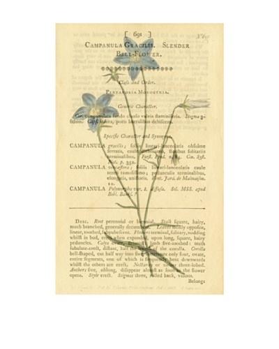 Marcus Jules Bell Flower