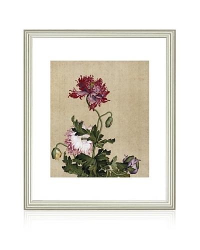 Mind Art Four Colors Poppy Flowers