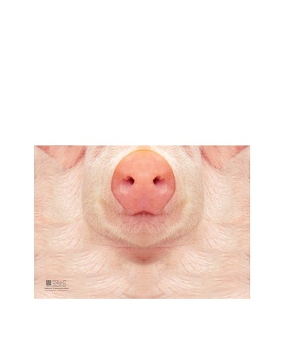 MollaSpace Sniffing Notebook, Pig