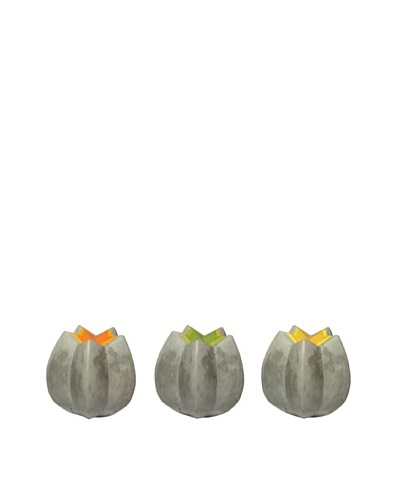 MU Design Co. Concrete Starfruit Form