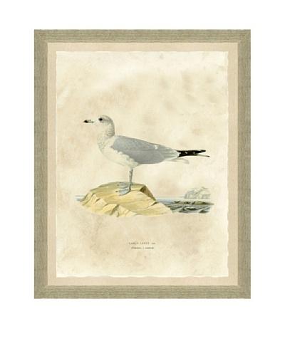 Seagull Print I