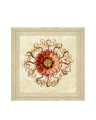 Coral Jellyfish Framed Print II