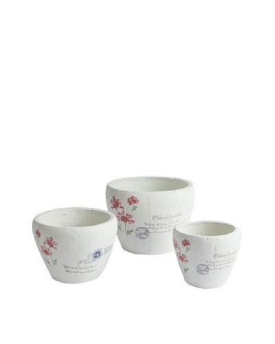 Napa Home & Garden Set of 3 Cheerful Cachepots