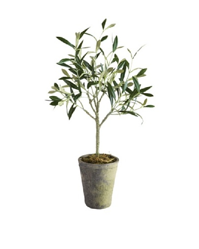 Napa Home & Garden Conservatory Collection 17 Olive Tree In Pot