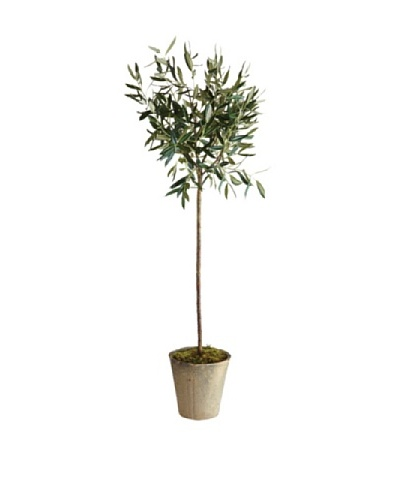 "Napa Home & Garden Conservatory Collection 46"" Olive Tree In Pot"