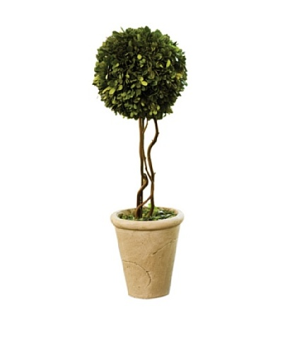Napa Home and Garden Boxwood Potted Tree Topiary