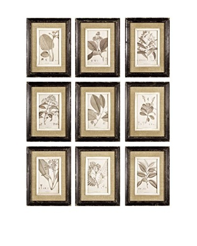 Napa Home and Garden Set of 9 Framed Naturalist Prints