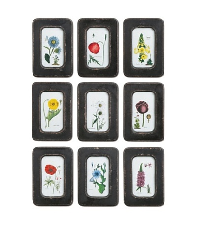 Napa Home and Garden Set of 9 Assorted Floral Prints with Distressed Wooden Frame