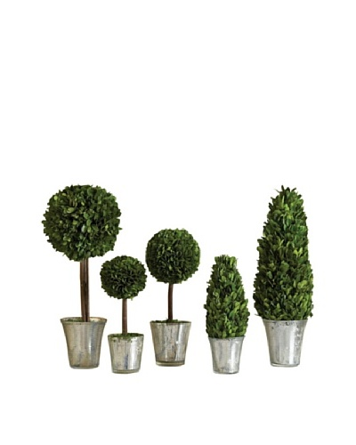 Napa Home and Garden Set of 5 Assorted Topiary in Mercury Glass Planters