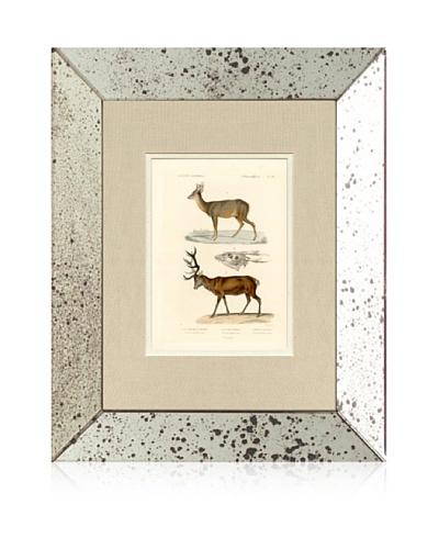 1854 Mirror Frame Deer Print
