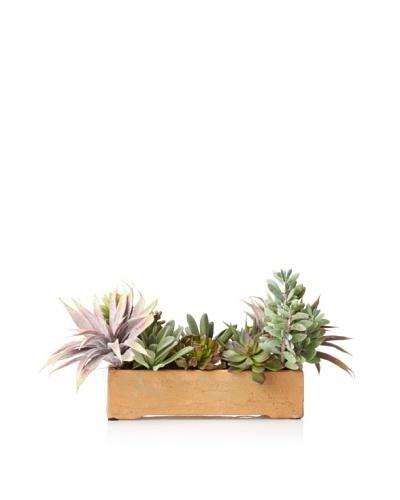 New Growth Designs Aloe, Agave, Sedum, Panda plant, and Echeveria in Terracotta Planter