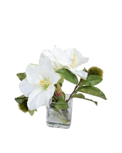 New Growth Designs White Amaryllis Arrangement