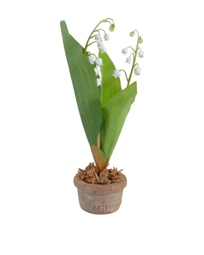New Growth Designs Lily Of The Valley in Terracotta Pot