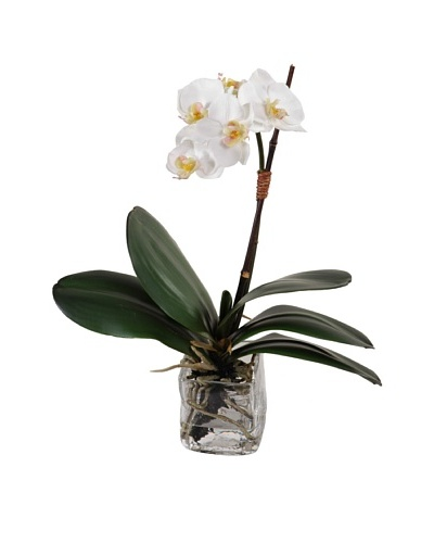 New Growth Designs Small Orchid in Glass Cube, White