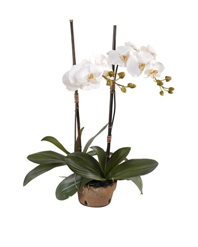 New Growth Designs Faux Phalaenopsis Double Orchid, White