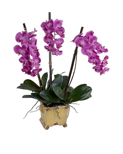 New Growth Designs Faux Phalaenopsis Orchid