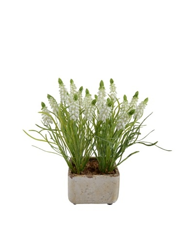 New Growth Designs Grape Hyacinths In Clay Pot, White