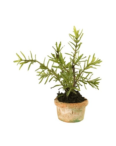 New Growth Designs Rosemary Mini-Pot