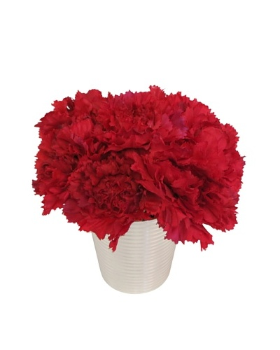 New Growth Designs Carnations in Silver Cup