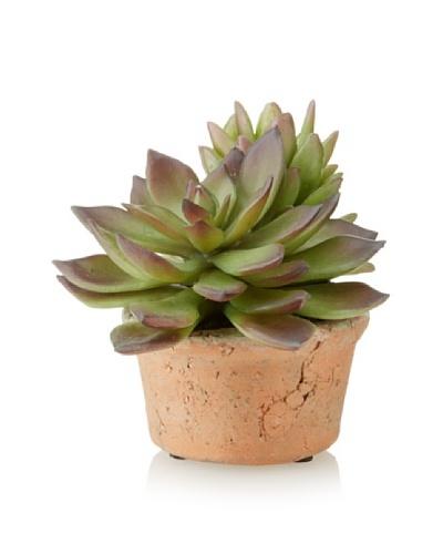 New Growth Designs Sedum and Echeveria in Round Clay Pot