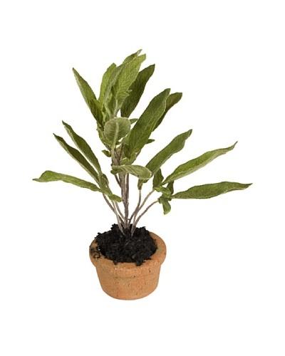 New Growth Designs Sage Spray Mini-Pot