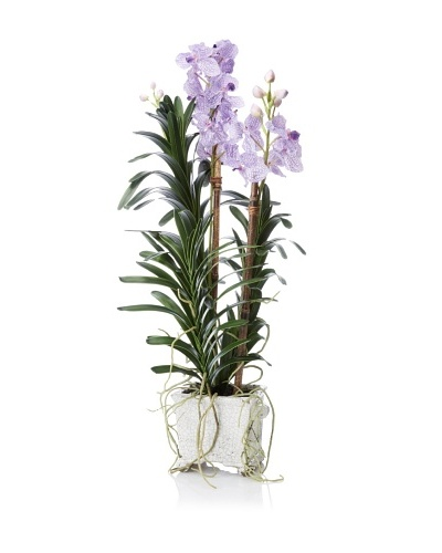 New Growth Designs Vanda Orchid in Crackle Glazed Square Pot