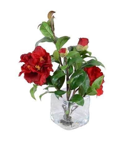 New Growth Designs Red Camellia Cuttings