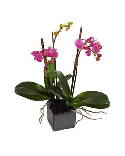 New Growth Designs Faux Pink Phalaenopsis Orchid