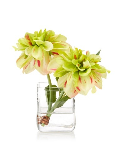 New Growth Designs Dahlia Cut Stems in Cube Vase with Faux Water, Red-Green