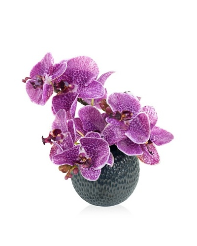 New Growth Designs Faux Phalaenopsis Orchid Arrangement