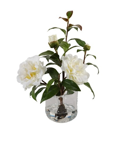 New Growth Designs White Camellia Cuttings