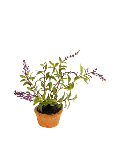 New Growth Designs Salvia Spray in Terracotta Pot