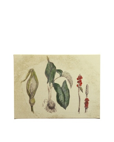 New York Botanical Garden Botanicals Giclée on Linen Canvas