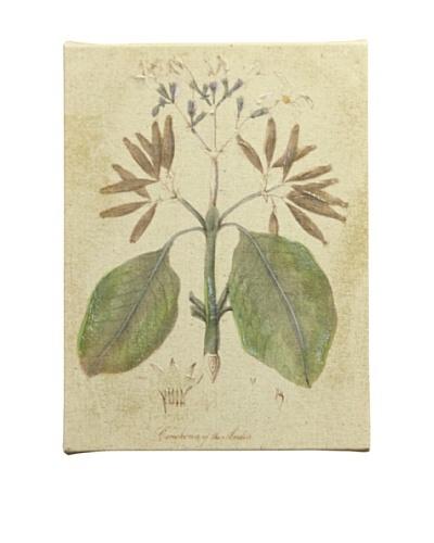 New York Botanical Garden Botanicals Giclée on Linen Canvas