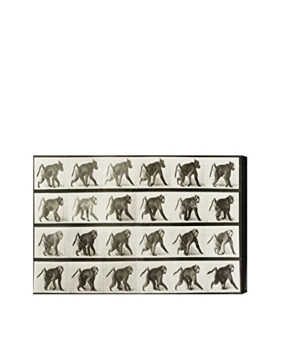 "Oliver Gal ""Baboon In Motion"" Canvas Art"