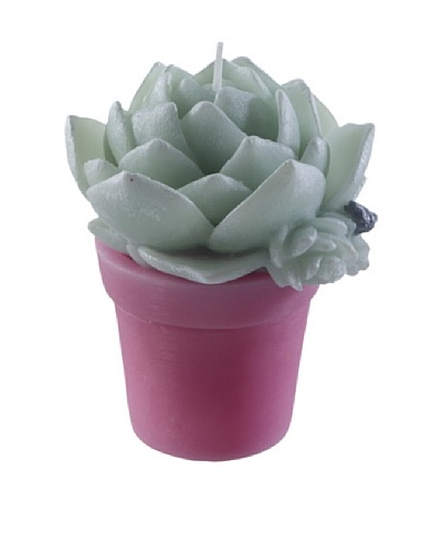 Point a la Ligne Small Potted Echeveria Candle, Pink