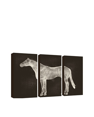 PTM Images Horse X-Ray Giclée Triptych Box