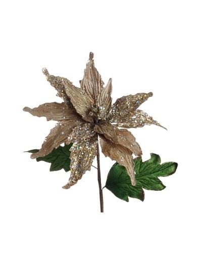 RAZ 11 Poinsettia