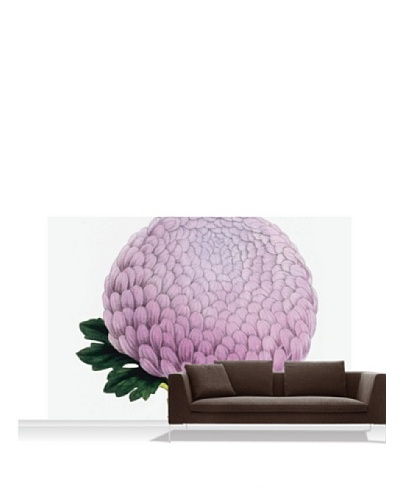 Royal Horticultural Society Chrysanthemum Cultivar Standard Mural - 12' x 8'