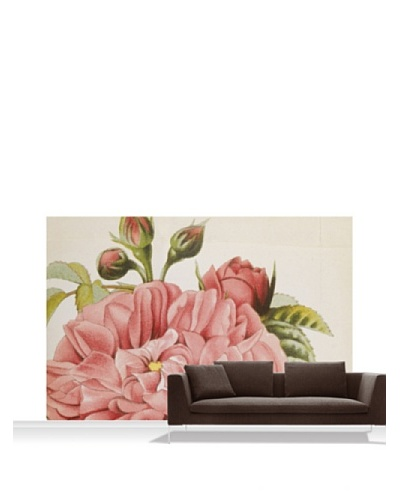 Royal Horticultural Society Rosa 'Baronne Prevost'' Standard Mural - 12' x 8'