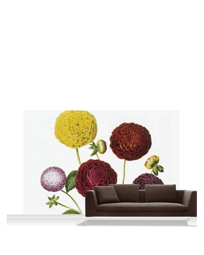 Royal Horticultural Society Dahlia Dwarf Standard Mural - 12' x 8'