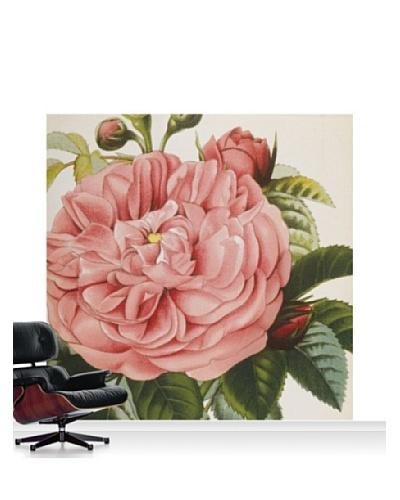 Royal Horticultural Society Rosa 'Baronne Prevost'' Mural, Standard, 8' x 8'