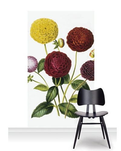 Royal Horticultural Society Dahlia Dwarf Standard Mural [Accent]