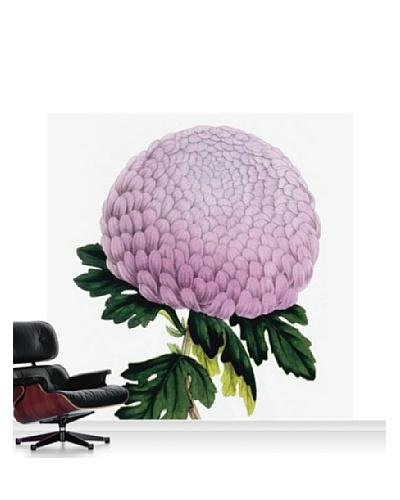 Royal Horticultural Society Chrysanthemum Cultivar Standard Mural - 8' x 8'